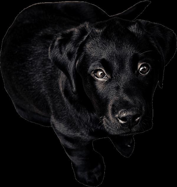 Psi Jaciel